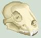Skull by Crocuta-Crocuta