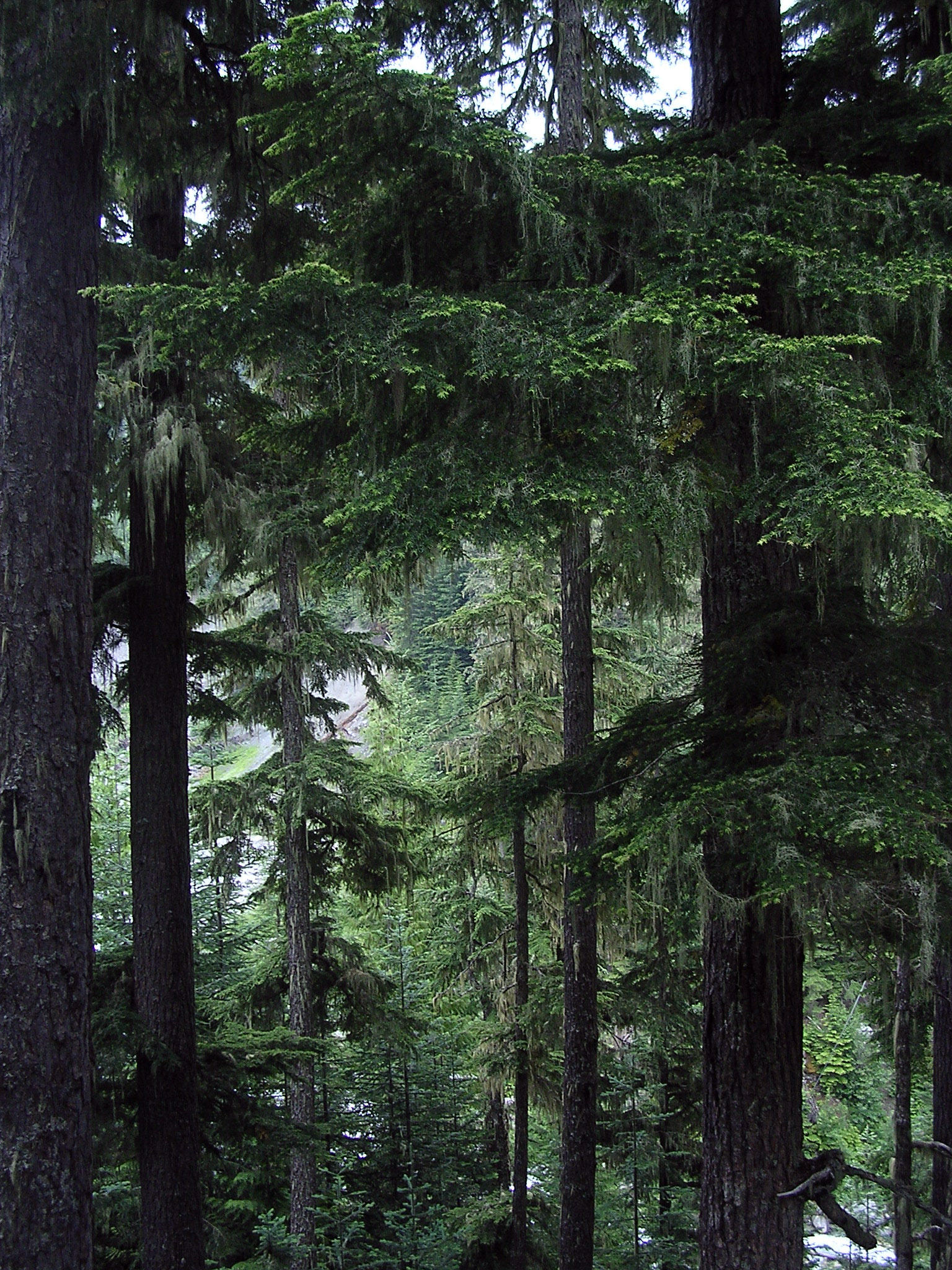 Canadian Forest By Nknb