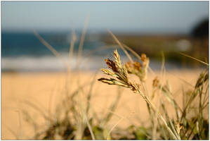 Beachside grass by wildplaces
