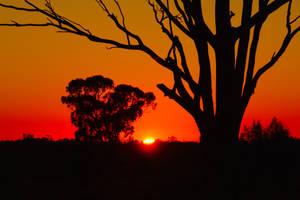 Sunrise - Deniliquin 2 by wildplaces