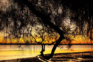 Bribie sunset through tree 1 by wildplaces