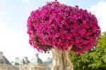 Paris in pink 1
