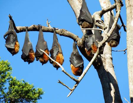 Bats on a branch 1