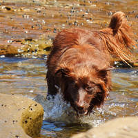 Like a dog to water by wildplaces