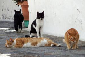 Four cats of the Apocalypse - Patmos