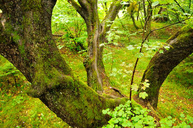 Plitvicka vegetation 1