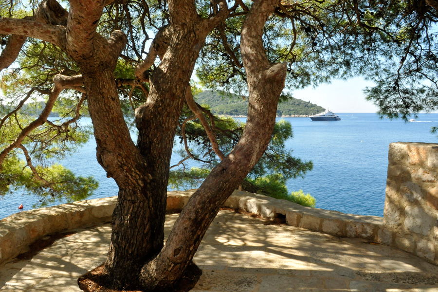 Aleppo pine - Dubrovnik by wildplaces