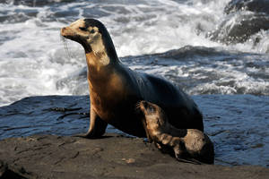 Galapagos sea lions 1 by wildplaces