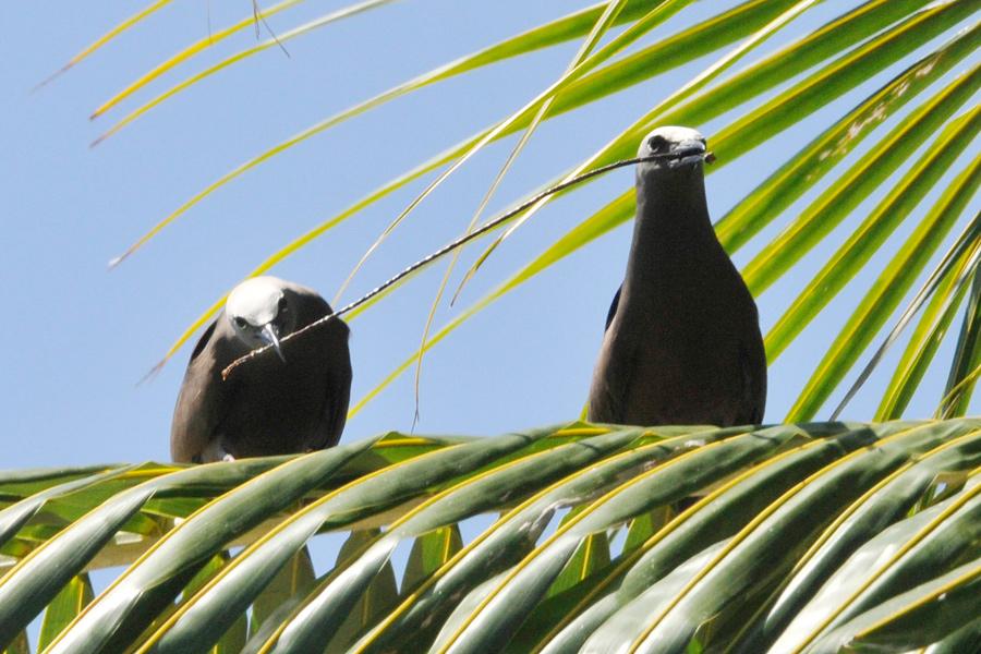 Bird cooperation