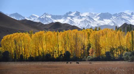 Aspen Grove 1 - Kyrgyzstan