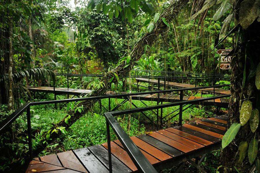 Amazon walkways by wildplaces