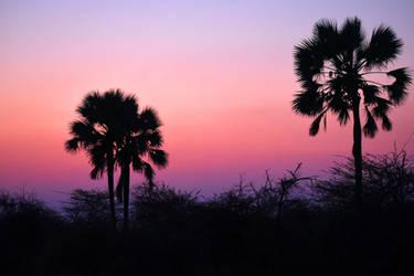 Onguma sunset light 1 - Namibia by wildplaces