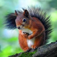 Kadriorg Park squirrel 1 - Tallinn