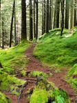 Mt Floyen forest paths - Bergen, Norway