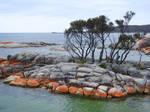 Binalong Bay 1 - Tasmania