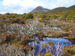 Walking Mt Hartz, Tasmania by wildplaces