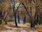 Zimbabwe revisited - woodland track
