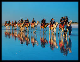 Camels on Cable Beach 1 by wildplaces