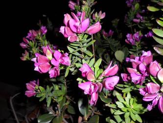 fioridinverno by ragdollsasHash
