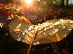39. leaf at sunrise by fr33d0m0f3xpr3ss10n