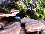 284. a wee mussel nestled in fungi on a beach log by fr33d0m0f3xpr3ss10n