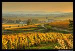 Golden Burgundy