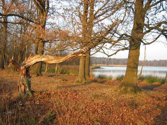 The tree by DvdGiessen