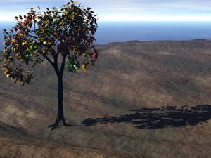 Tree at sea