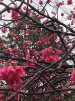 In the Sakura Gardens by AnnoyerOfDoitsu