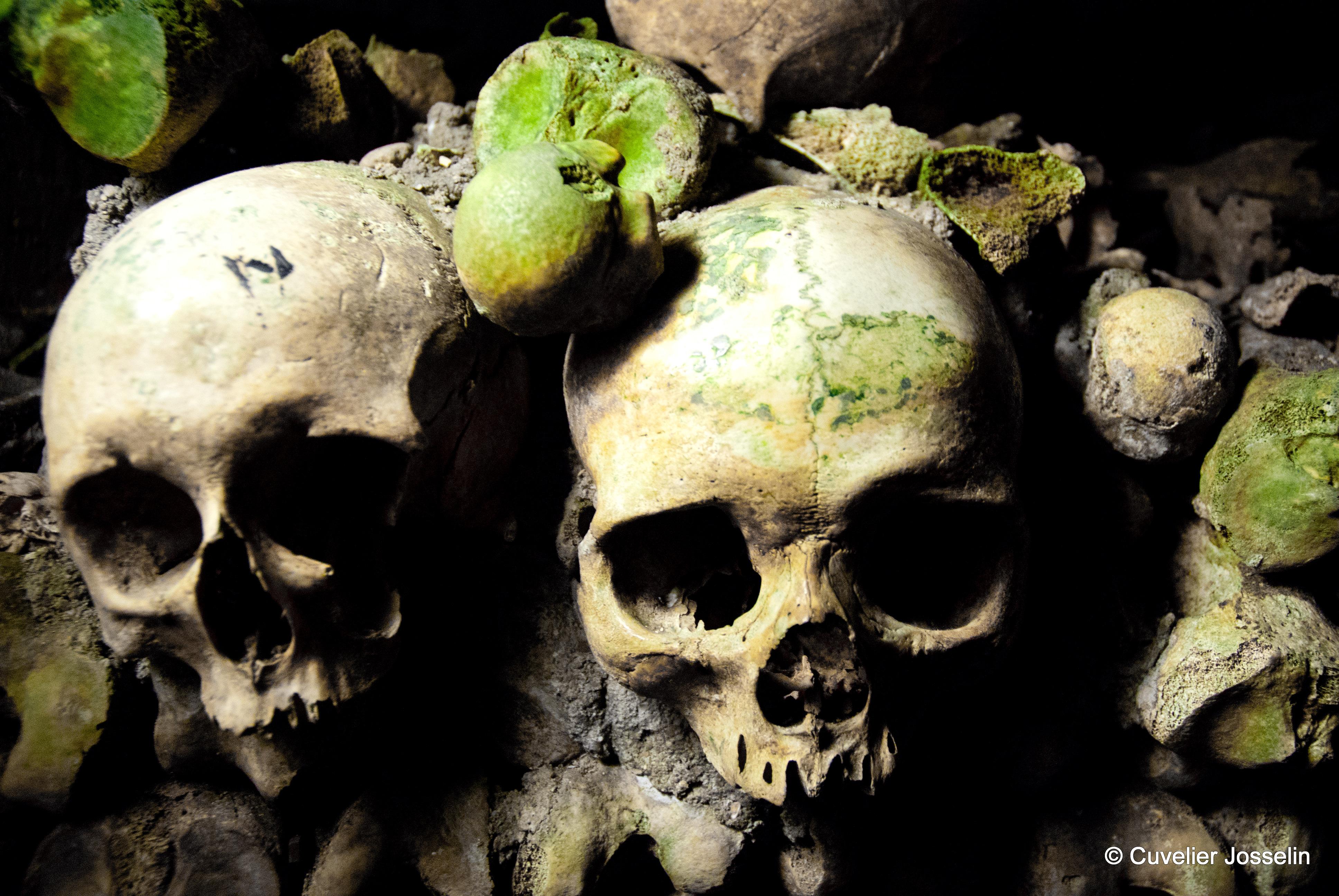 skull by josselin94