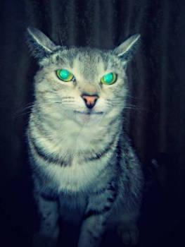 cat the Dusya