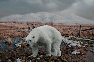 North Pole in 20 years