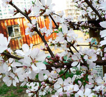 Spring by BlackMagdalena