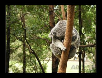 Sleepy Kuala by AEvision