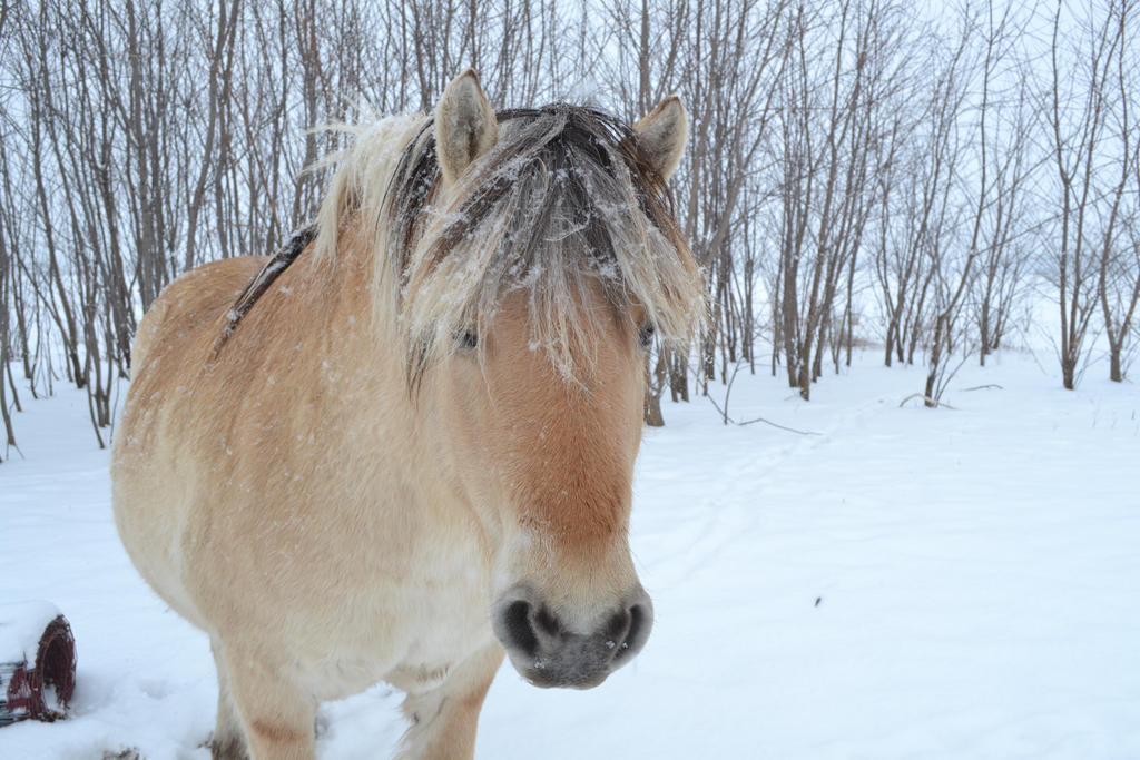 Toki in the Snow by SparklinBurgndy