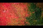 Autumn_colors II by IrisErelar