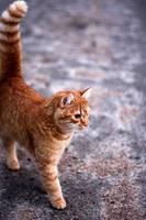 Kitty by sofiaperhomaa