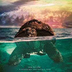 Sea Turtle by KronDesign