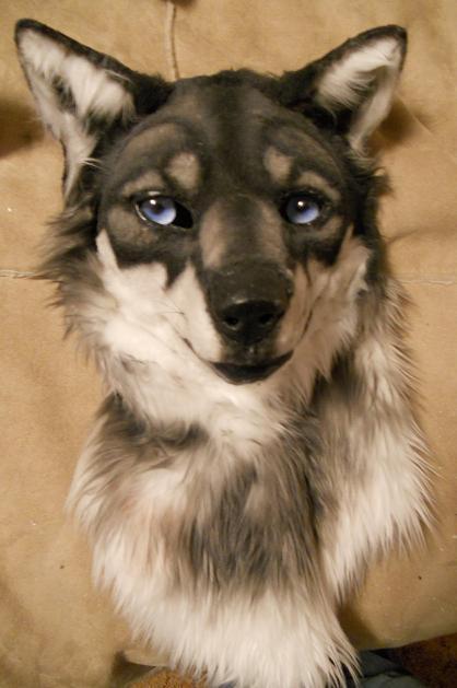 blue eyes by Sharpe19