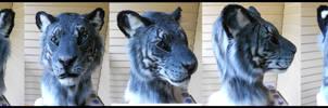 Maltese 'Blue' Tiger by Sharpe19