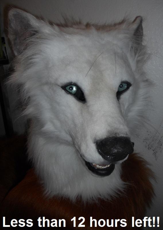 Auction reminder: wolf by Sharpe19