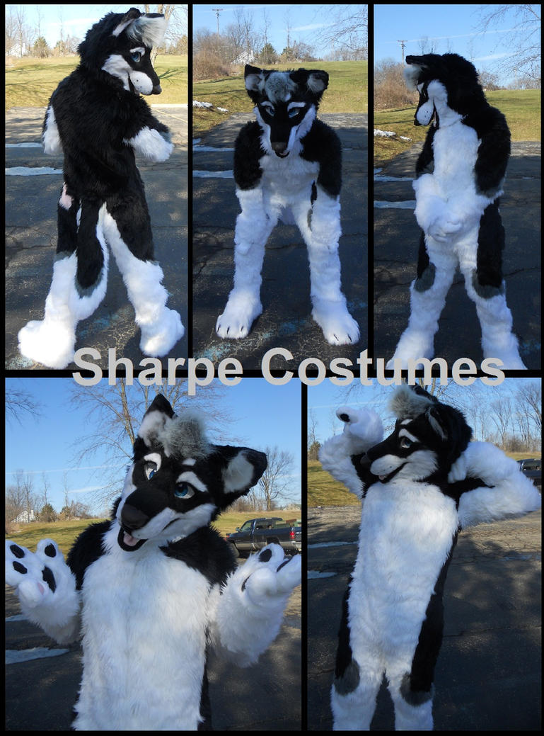 Husky Fursuit by Sharpe19