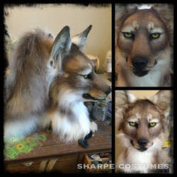 Coyote at FWA by Sharpe19