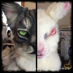 Tabby/rabbit sneak peek