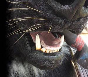 Teeth/nose stream