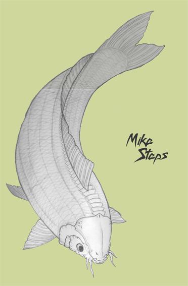 Koi fish sketch by mikesteps on deviantart for Como criar peces koi