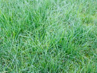 Free Wet Green Grass Photo