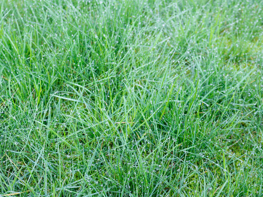 Free Wet Green Grass Photo by BackgroundStore