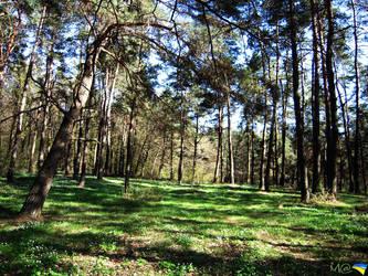 Ukrainian forest by MA88