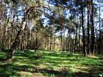 Ukrainian forest